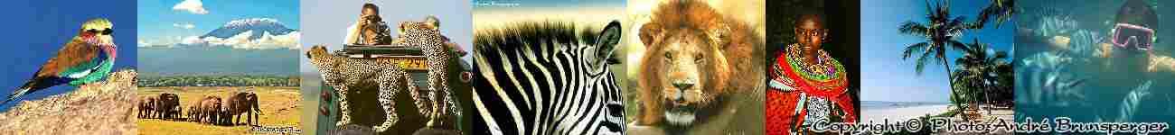 Quels sont les différents types de safaris en tanzanie ?