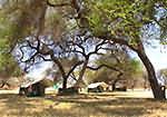 Camping en tentes un petit peu plus grandes en brousse en Tanzanie