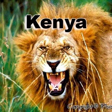 lion kenya tanzanie Kenya Rwanda Ouganda Namibie Botswana