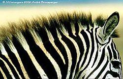 safari authentique en 4x4 privatif Zanzibar en Tanzanie