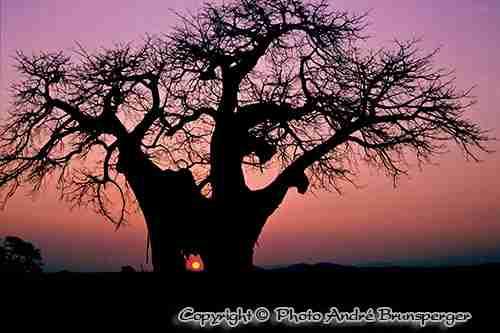 Lever de soleil en dans Ruaha en Tanzanie