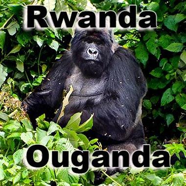 Gorille Rwanda Ouganda Kenya Rwanda Ouganda Namibie Botswana